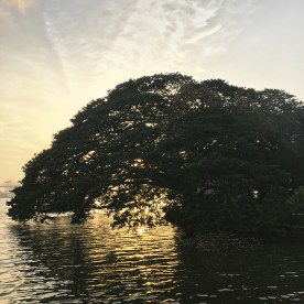 Harbour cruise, tree, sunset, Kochi, Fort Kochi, Cochin, Kerala, South India, India, Faces Places and Plates blog